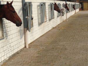 Waldenserhof Pferdepension